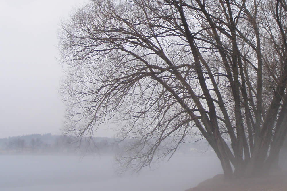 Misty Tree looking over a lake