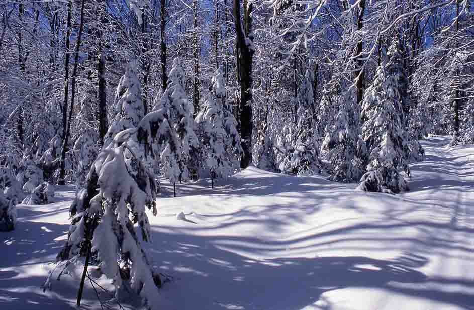 Snowy Trail and tress with snow